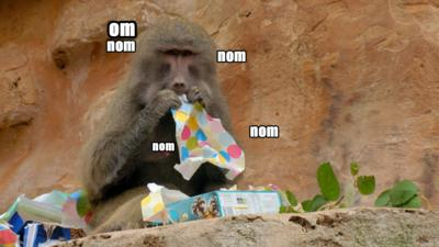 A monkey eating wrapping paper.