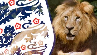 The Zoo - Three Lions at The Zoo - it's coming home!