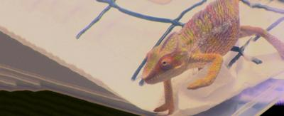 A chameleon in a small plastic container.