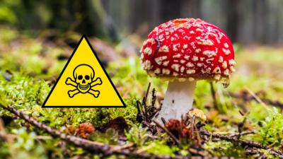 Autumnwatch on CBBC - Top Five Poisonous Mushrooms