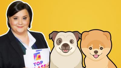 Top Class - Quiz: Dogs