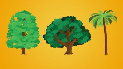 Top Class - Quiz: Tree-rific trees