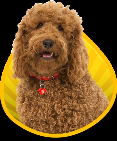 Waffle the Wonder Dog logo.
