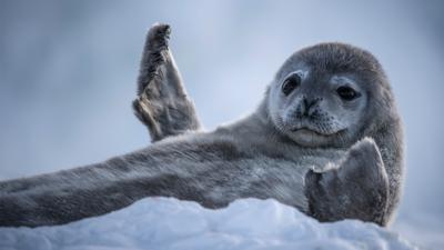 Nature on CBBC - Quiz: Seven Facts, One Animal - Antarctica