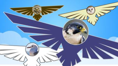Springwatch on CBBC - Can you wing this UK bird quiz?