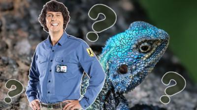 Andy's Secret Hideout - Andy's Secret Hideout: Quiz 3