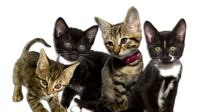 Meet the Kittens Image