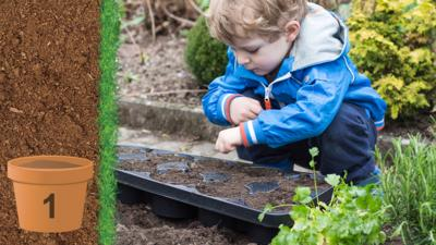 A Little Boy Planting Seeds In A Plastic Tray