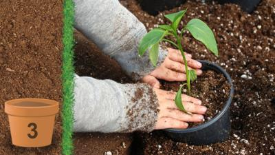 A childs hands patting down the soil in a plant pot