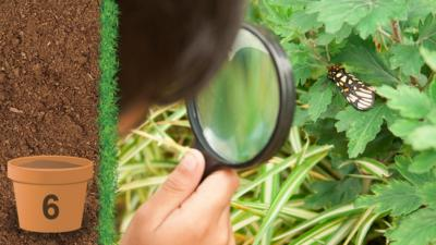 A child looking at a butterfly through a magnifying glass