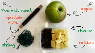 An ingredients page, showing some gardening wire, string, an apple, cheese cubes and raisins for the bird kebab make.