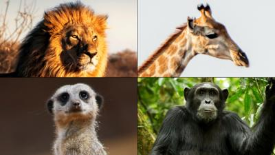 Andy's Safari Adventures - What safari animal are you?