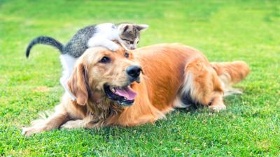 My Pet and Me - Things to think about before getting a family pet