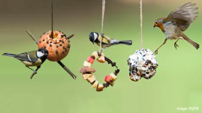 Three bird feeders in a garden, made from an apple, a pine cone and a fruit hoop.
