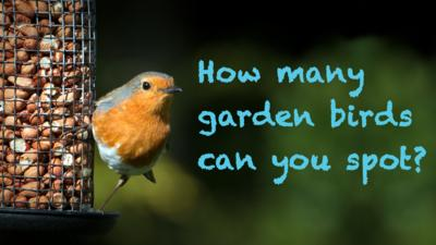 A robin on a bird feeder with text saying 'How many garden birds can you spot?'
