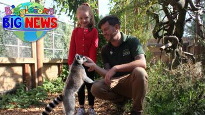 Biggleton - Zookeeper