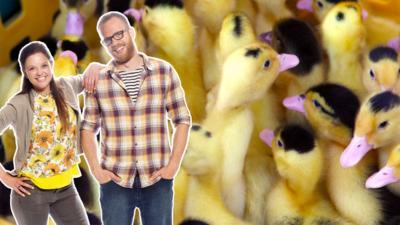 My Pet and Me - Nursery Ducklings