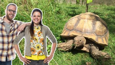 My Pet and Me - Tortoises