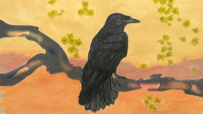 CBeebies Radio - Little Robin Meets… Crow