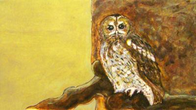 CBeebies Radio - Little Robin Meets… Tawny Owl