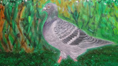 CBeebies Radio - Little Robin Meets… Pigeon
