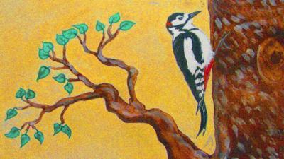 CBeebies Radio - Little Robin Meets… Woodpecker