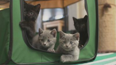 Ferne and Rory's Vet Tales - Rocket The Kitten
