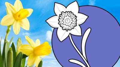 Let's Celebrate - St David's Day Daffodil