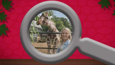 Maddie's Do You Know? - The Zoo and You Spot the Difference Quiz