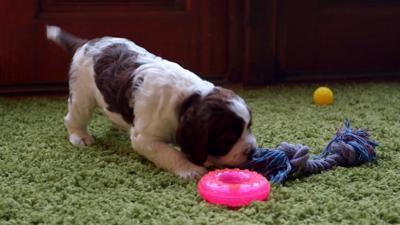 Discover CBBC - Meet The Pups - Toys