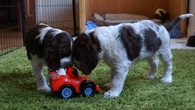 Discover CBBC - Meet The Pups - New Toy