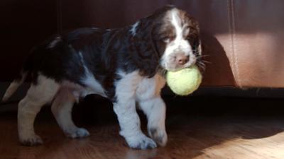 Discover CBBC - Meet The Pups - Morgan's Favourite Ball