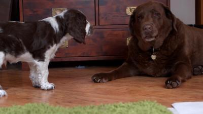 Discover CBBC - Meet The Pups - Monty
