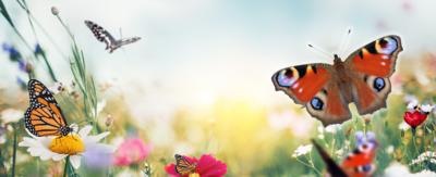 Do you know these butterfly names?