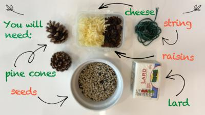 An ingredients page, showing some seeds, string, grated cheese and raisins, lard and pine cones for the bird pine cone feeder make.