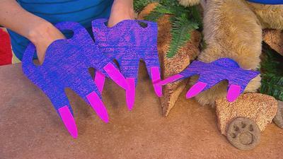 Velociraptor Feet