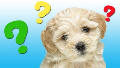 Waffle the Wonder Dog - Match the puppy quiz