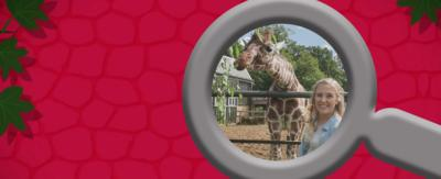 Play Maddie's, the Zoo and You Quiz