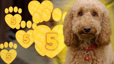 Waffle the Wonder Dog - Top 5 Tips for Starting School