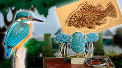 A kingfisher, a fish fossil and an Egyptian scarab necklace.