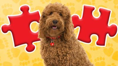 Waffle the Wonder Dog - Waffle the Wonder Dog Jigsaw