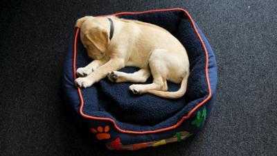 Discover CBBC - Sleepy Iggy