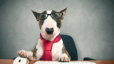 A dog in a tie sits at a desk with a purple circle graphic overlay