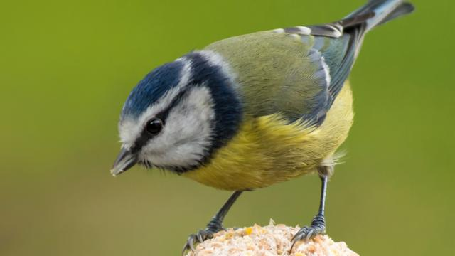 Make your own bird banquet - CBBC - BBC