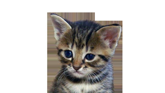 Meet The Kitten Episodes