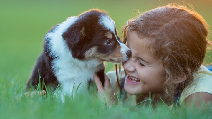 Quiz: Are you a dog's best friend? - CBBC - BBC