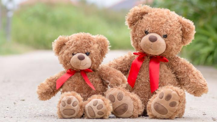 the teddy bear quiz cbbc bbc