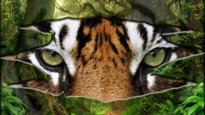 Quiz: Are you a tiger expert? - CBBC - BBC