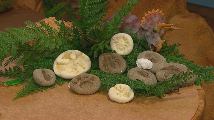 making a fossil cbeebies bbc