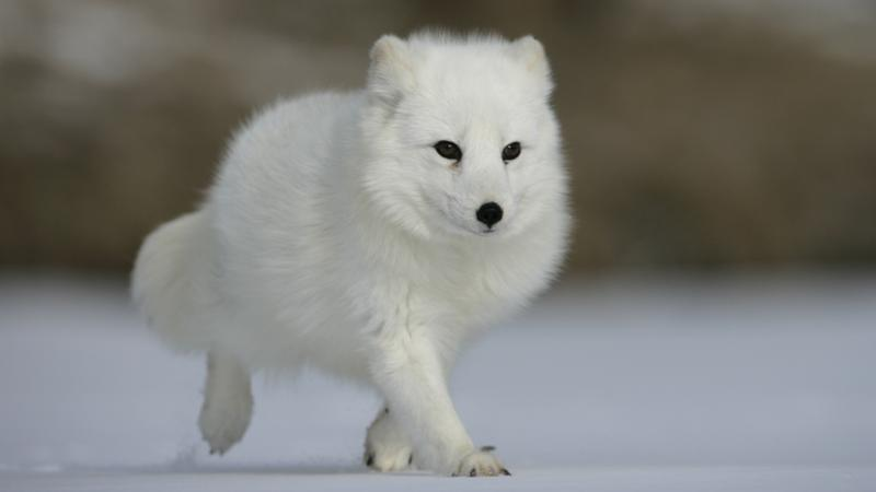 Cute Arctic Animal Babies